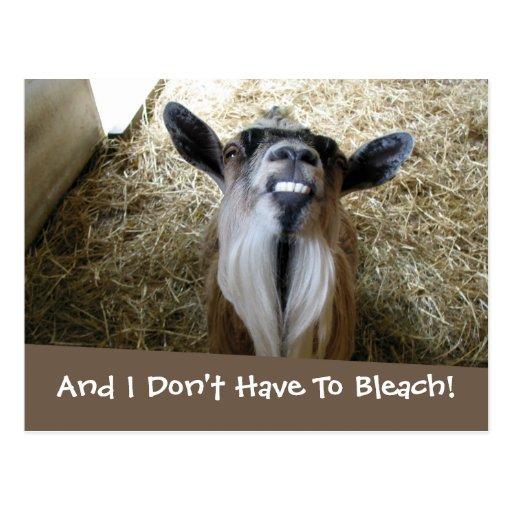 Smiling Goat Postcards
