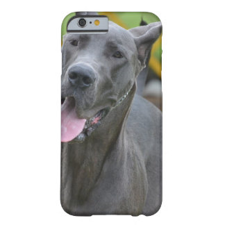 Smiling Great Dane Barely There iPhone 6 Case