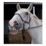 Smiling Horse Poster