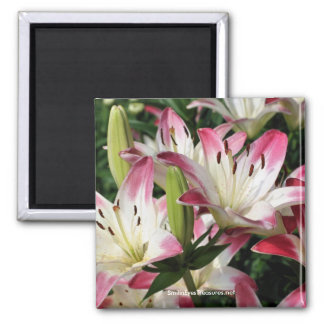 Smiling Lilies Flower Photography Magnet