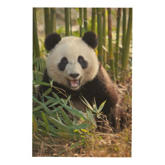 Smiling Panda Portrait Wood Wall Art