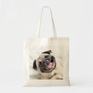 Smiling pug.Funny pug