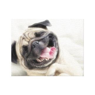 Smiling pug.Funny pug Canvas Print