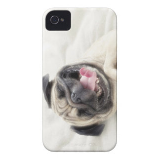 Smiling pug.Funny pug iPhone 4 Covers