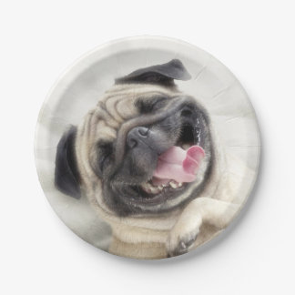 Smiling pug.Funny pug Paper Plate