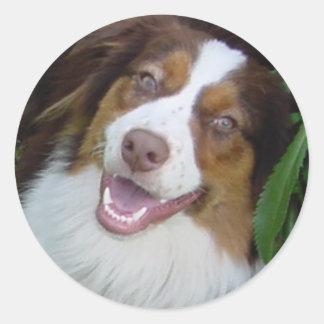 Smiling Red Tri Aussie Round Sticker