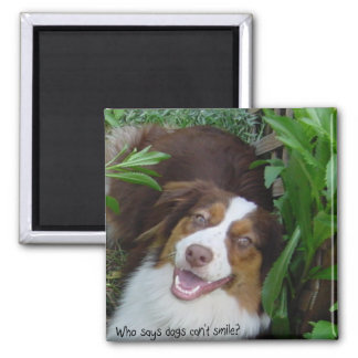 Smiling Red Tri Aussie Square Magnet