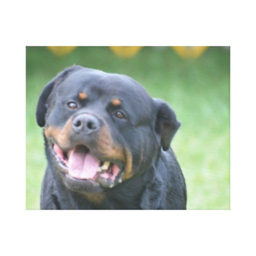 Smiling Rottweiler Gallery Wrap Canvas