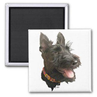 Smiling Scottish Terrier Square Magnet