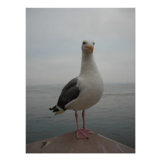 Smiling Seagull Poster
