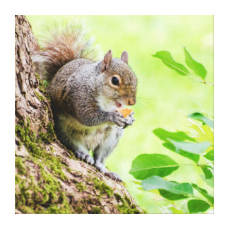 Smiling Squirrel Eating in the Park Canvas Canvas Print
