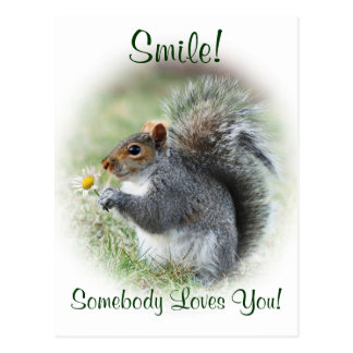 Smiling Squirrel Loves You Postcard