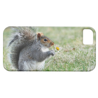 Smiling Squirrel with Daisy Barely There iPhone 5 Case