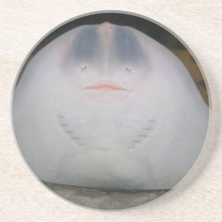 Smiling Sting Ray Swimming in Water Drink Coaster