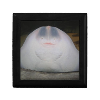 Smiling Sting Ray Swimming in Water Small Square Gift Box