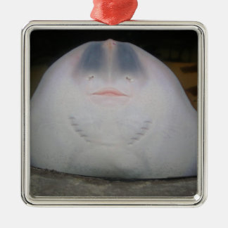 Smiling Sting Ray Swimming in Water Silver-Colored Square Decoration