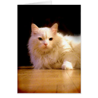 Smiling white cat greeting card