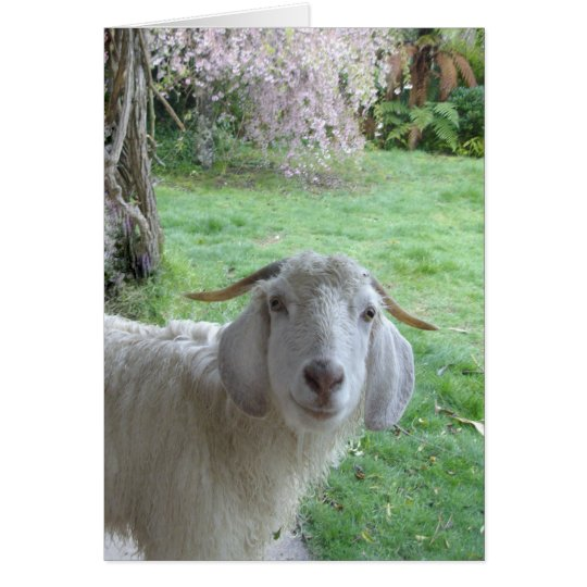 Smiling white goat card
