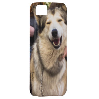 Smiling Wolf iPhone 5 Cases