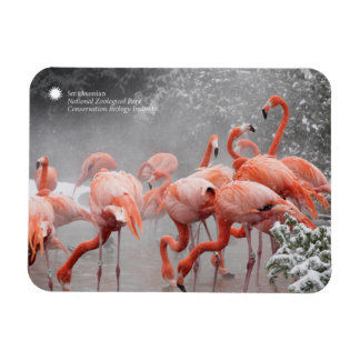 Smithsonian | Flamingos In The Snow Magnet