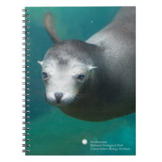 Smithsonian | Sea Lion Notebook