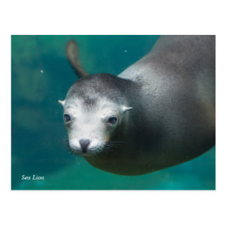 Smithsonian | Sea Lion Postcard