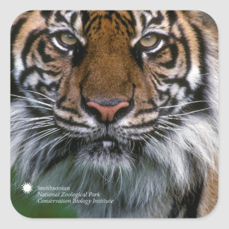 Smithsonian | Sumatran Tiger Soyono Square Sticker