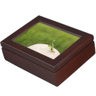 Smoking mantis memory box
