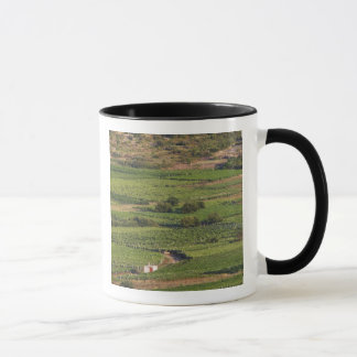 Smokvica vineyards on Korcula from the Toreta Mug