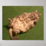 Smoochie Girl's Daily Kitty Yoga
