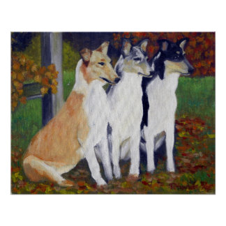Smooth Collie Dog Portrait Posters