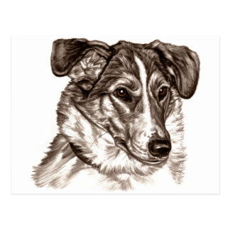 Smooth Collie Portrait Postcard