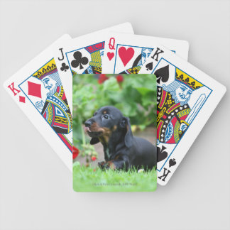 Smooth-haired Miniature Dachshund 1 Bicycle Playing Cards