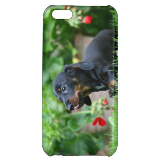 Smooth-haired Miniature Dachshund 1 iPhone 5C Cases