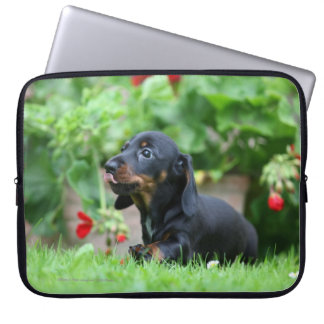 Smooth-haired Miniature Dachshund 1 Laptop Sleeve