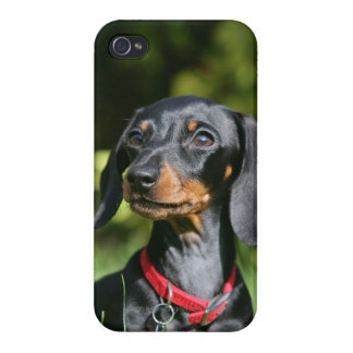 Smooth-haired Miniature Dachshund 3 iPhone 4 Cases