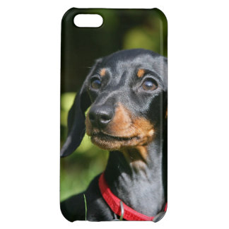 Smooth-haired Miniature Dachshund 3 iPhone 5C Case