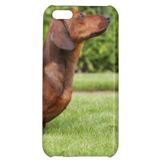Smooth-haired Miniature Dachshund Cover For iPhone 5C
