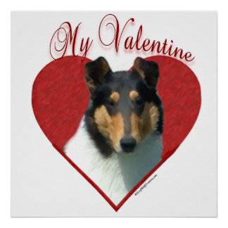 Smooth Tricolor Collie My Valentine Poster