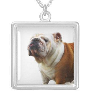 Smug Bulldog Necklace