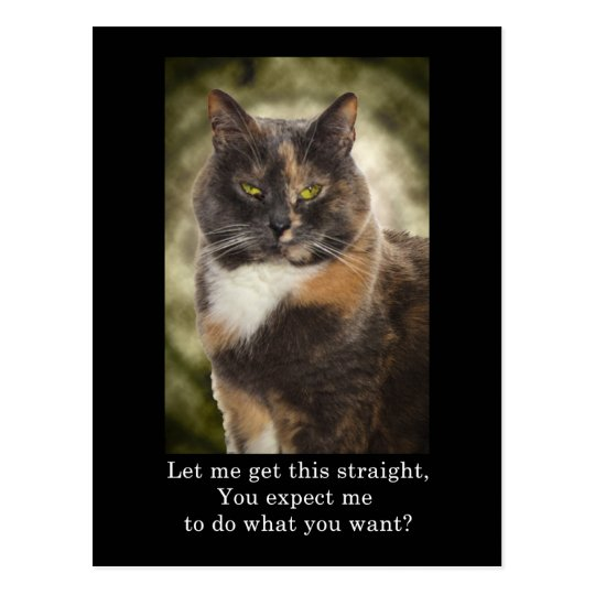 Smug Kitty - Do What You Want? Postcard