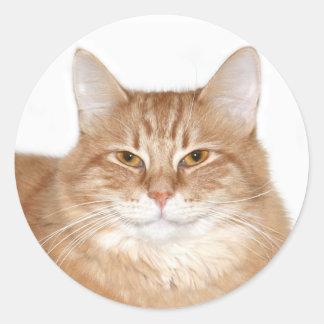 Smug smiling cat round sticker