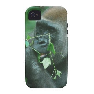 Snacking Gorilla Vibe iPhone 4 Covers