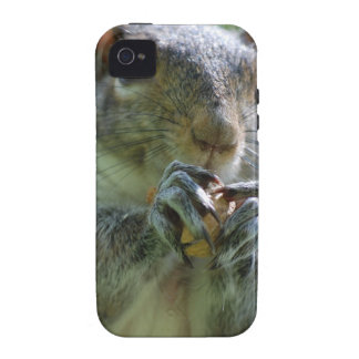 Snacking Squirrel iPhone 4/4S Cover