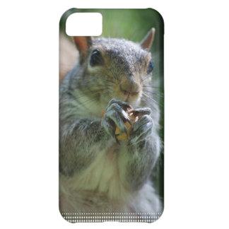 Snacking Squirrel iPhone 5C Case