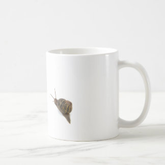Snail and chrysanthemum coffee mug