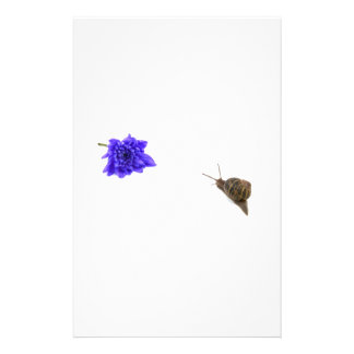 Snail and chrysanthemum stationery