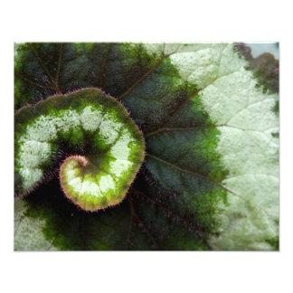 Snail Begonia Leaf Art Photo