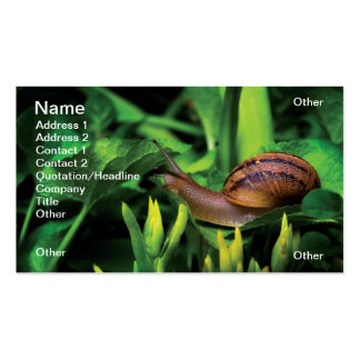 Snail Pack Of Standard Business Cards