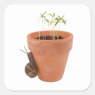 Snail climbing a flowerpot square sticker